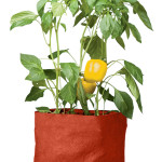 pepper grow bag