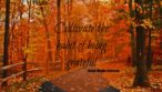 GIVE THANKS AND PRACTICE GRATITUDE DAILY FOR LONG, HAPPY LIFE|ko-ecolife|forest-autumn-road-fall-woods-leaves-landscape-emerson-quote