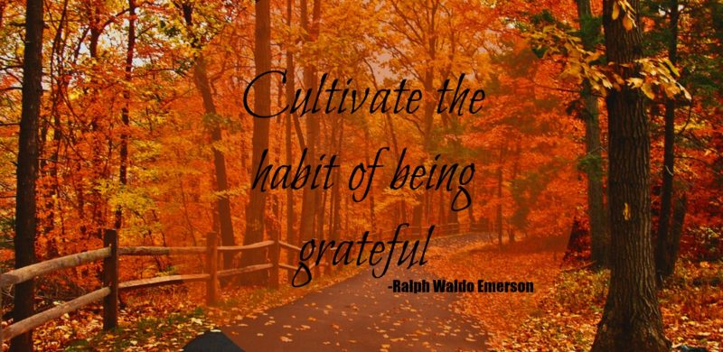 GIVE THANKS AND PRACTICE GRATITUDE DAILY FOR LONG, HAPPY LIFE|ko-kidz|ko-ecolife|forest-autumn-road-fall-woods-leaves-landscape-emerson-quote