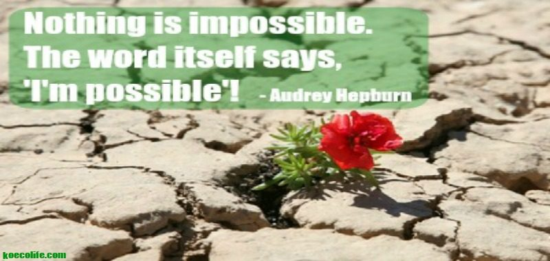 Monday-motivation-meditation-im-possible-audrey-hepburn-quote-red-flower-growing-out-of-rocks-ko-ecolife-blog